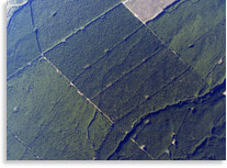 Arial Photo of Kaingaroa Forest