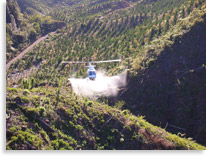 Aerial spraying of pinus radiata in Kaingaroa forest to  manage competing weeds