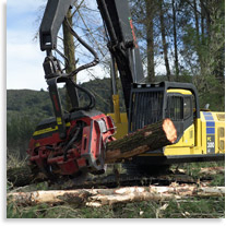 Mechanised de-limbing of radiata pine in Kaingaroa forest