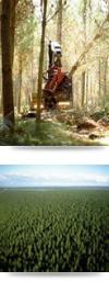 Timberlands mechanised harvesting in Kaingaroa forest